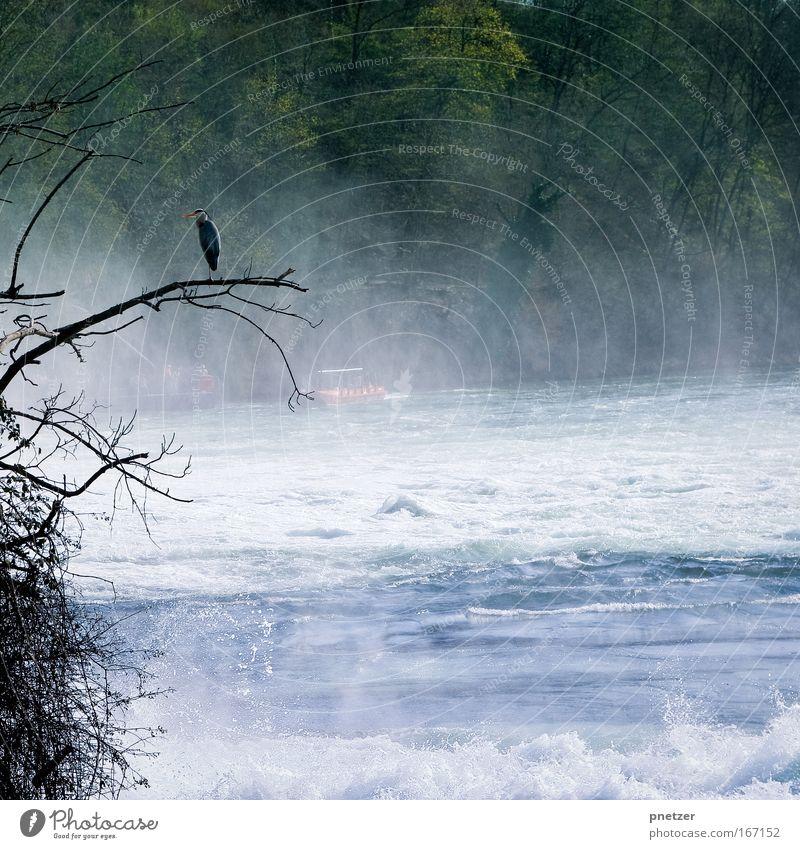 R(h)einfall Natur Wasser Baum Strand Ferien & Urlaub & Reisen Tier Landschaft Umwelt Frühling Küste Wellen Vogel sitzen Ausflug Tourismus Wildtier