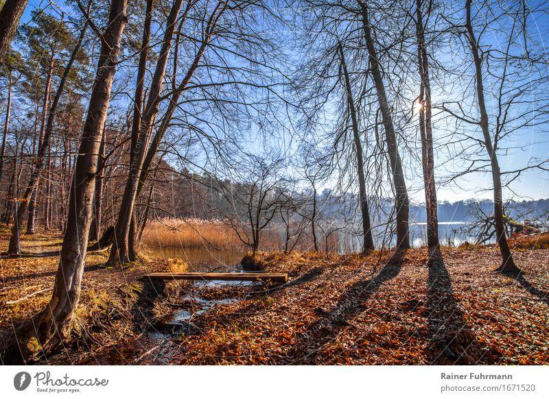 in der Brandenburger Natur bei Gegenlicht Umwelt Landschaft Wolkenloser Himmel Sonne Winter Wetter Schönes Wetter Baum Wald ruhig Farbfoto Außenaufnahme
