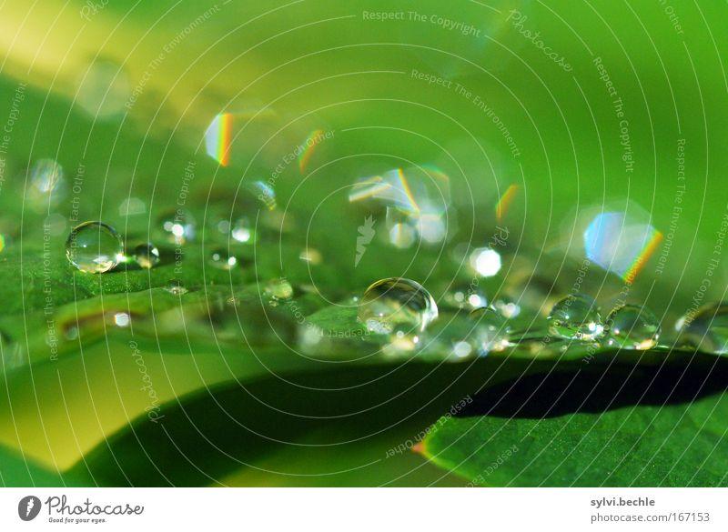 wonderful creation Natur Pflanze Wetter Regen Blatt glänzend leuchten frisch natürlich schön grün Tropfen nass regenbogenfarben Wasser Wassertropfen Farbfoto