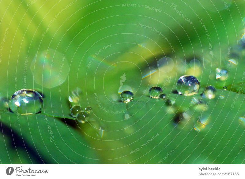 i stand in awe of you Natur schön grün Pflanze Blatt gelb kalt Regen glänzend Wetter nass Wassertropfen frisch mehrere Tropfen Wasser