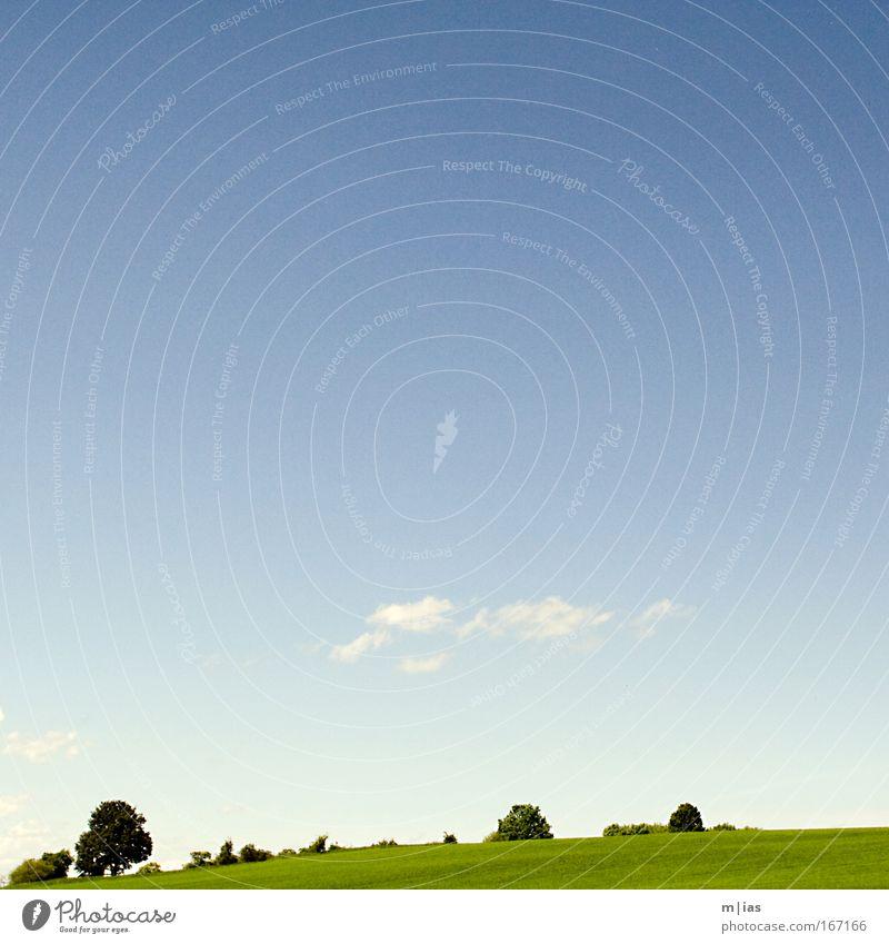 Scherenschnitt im Sommer Natur Himmel Baum grün blau Pflanze Sommer Wolken Einsamkeit Erholung Silhouette Wiese Gras Glück Landschaft Luft