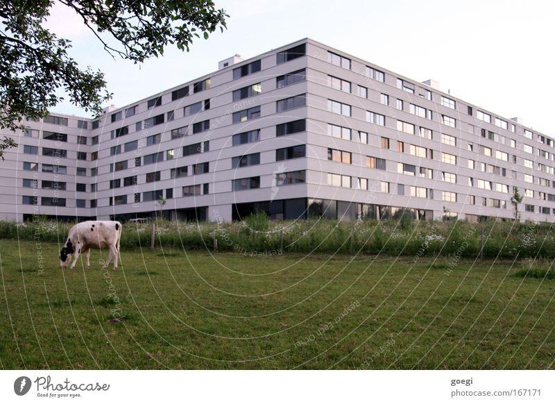 Stadtrand Natur Himmel Baum Haus Ernährung Tier Wiese Gras Garten Gebäude Landschaft Feld Architektur Fassade Idylle