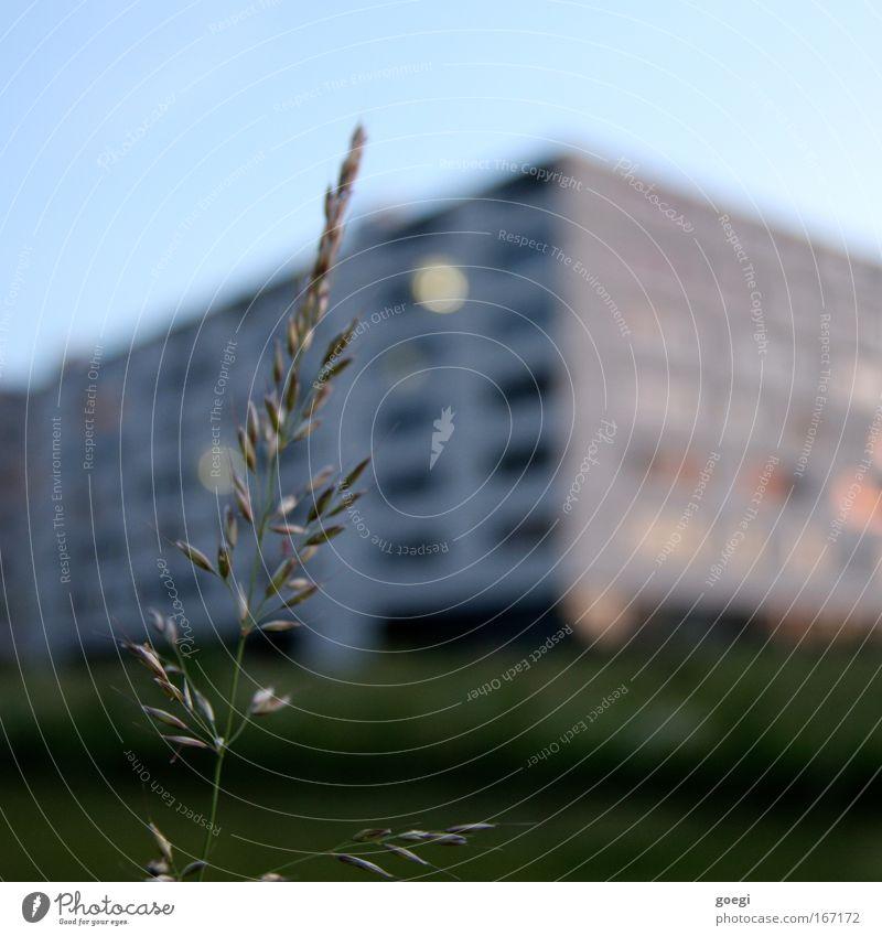Gras Natur grün blau Pflanze Gras Gebäude Bauwerk Halm Ähren Stadtrand