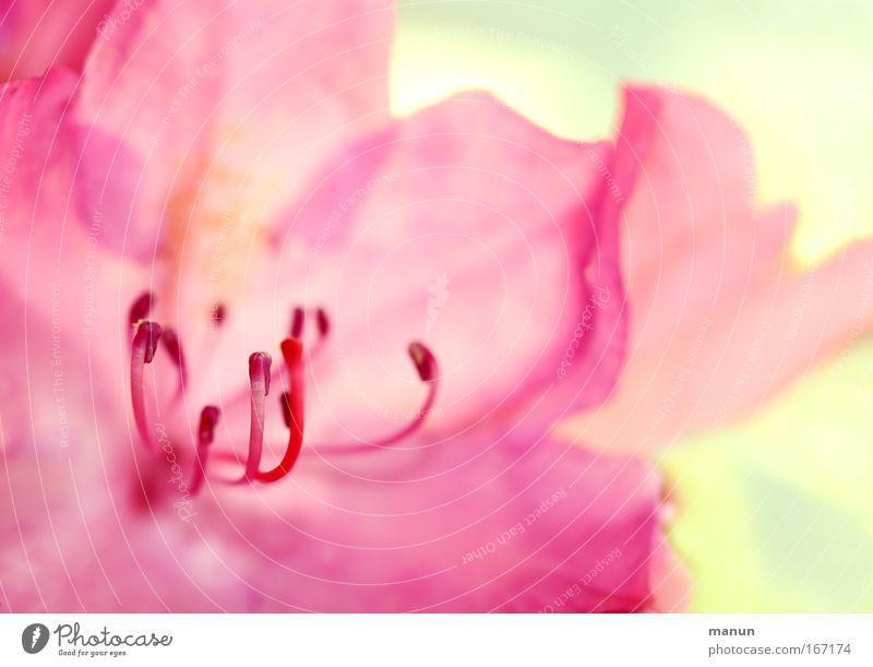 think pink! schön ruhig Erholung Blüte Frühling rosa frisch Fröhlichkeit ästhetisch außergewöhnlich Duft abstrakt harmonisch Sinnesorgane Wohlgefühl Gartenarbeit