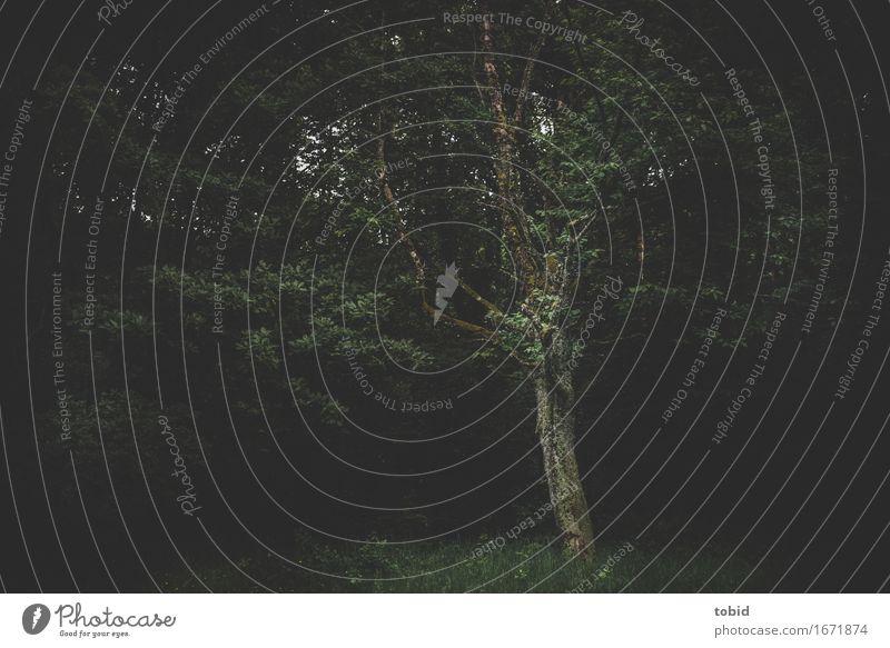 Lichtung Natur Landschaft Pflanze Baum Gras Sträucher Moos Wiese Wald dunkel kalt Einsamkeit einzigartig Idylle Waldlichtung Baumstamm Kontrast Flechten