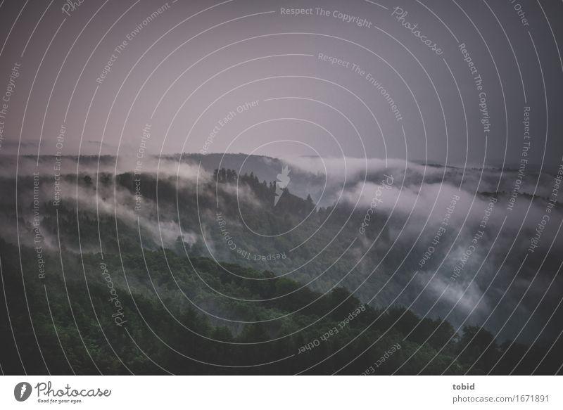 Regenwetter Himmel Natur Pflanze Baum Landschaft Einsamkeit Wolken Ferne dunkel Wald Horizont einzigartig bedrohlich Urelemente Hügel Tal