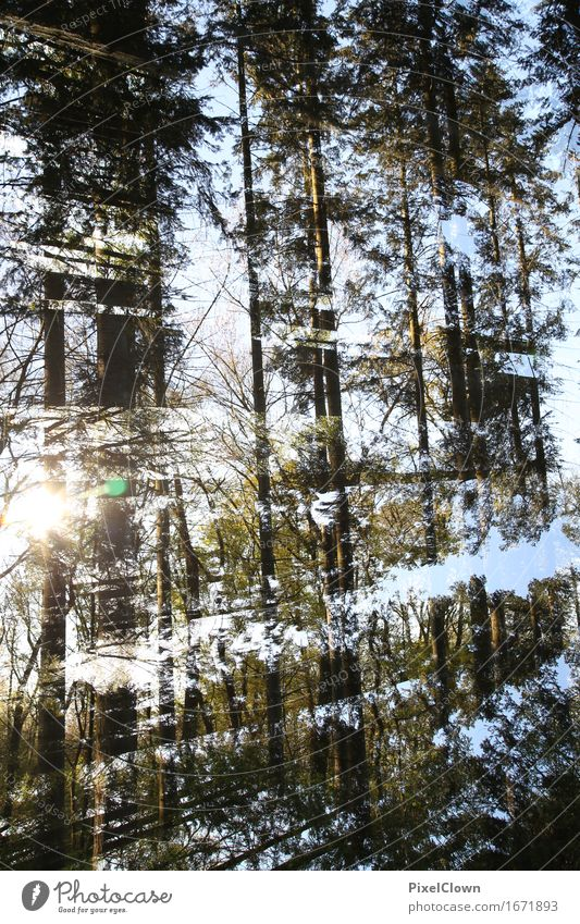 Wald Natur Ferien & Urlaub & Reisen Pflanze schön Baum Landschaft Einsamkeit Blatt ruhig Umwelt Gefühle Herbst Tourismus träumen Wachstum