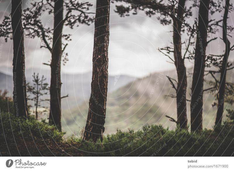 Ausblick Natur Landschaft Pflanze Himmel Wolken Horizont Wetter Baum Gras Sträucher Moos Wald Hügel Berge u. Gebirge Ferne Unendlichkeit Einsamkeit einzigartig
