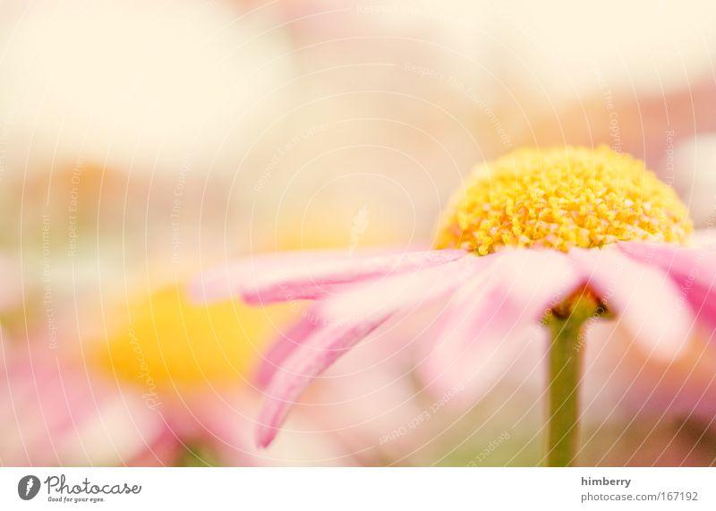 present dreams Natur schön Pflanze Blume ruhig Erholung Leben Blüte Park Feste & Feiern Zufriedenheit rosa natürlich frisch ästhetisch Lifestyle