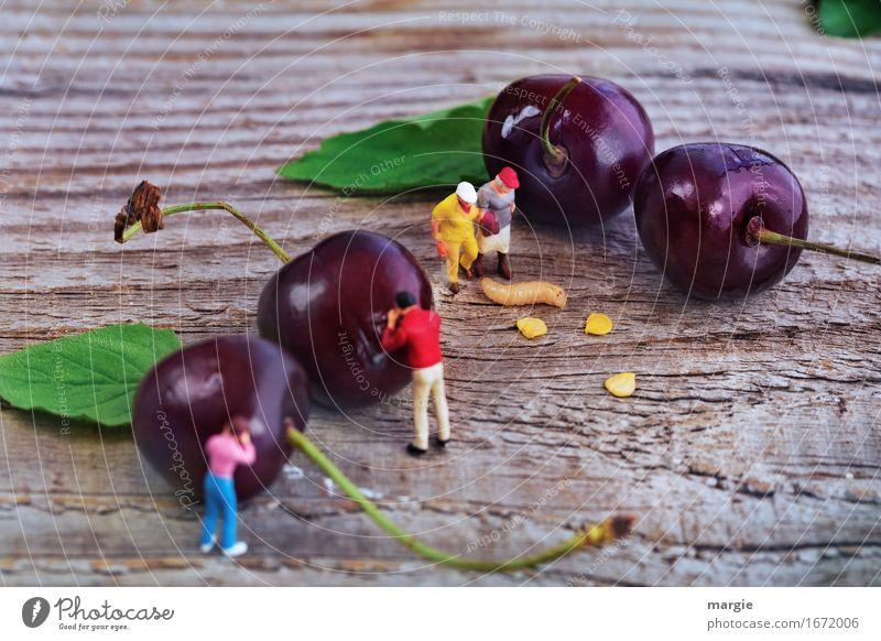 Miniwelten - gut Kirschen essen? Lebensmittel Frucht Bioprodukte Vegetarische Ernährung maskulin feminin 4 Mensch Blatt Wurm Essen gehen rot Wurmloch Schlange