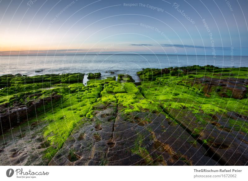 Moos Umwelt Natur Landschaft Küste blau braun grün orange Stein Moosteppich Meer Algarve Felsen Dämmerung Stimmung Ferien & Urlaub & Reisen Portugal Farbfoto