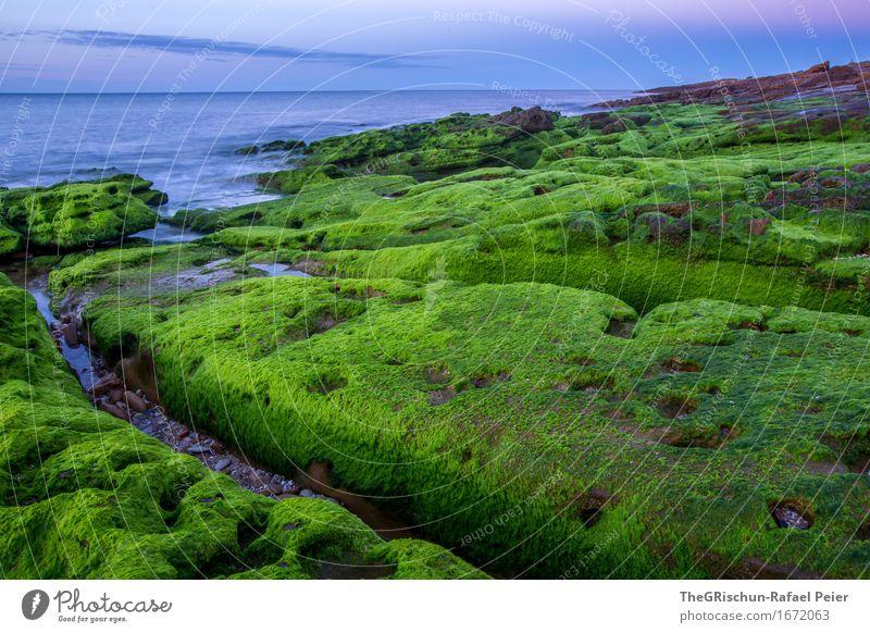 Moos Umwelt Natur Landschaft blau grün rosa Algarve Küste Stein Felsen Meer Wasser Himmel bewachsen Pflanze Farbfoto Außenaufnahme Detailaufnahme Menschenleer