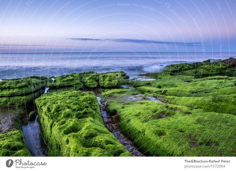 Moos II Umwelt Natur Landschaft Himmel blau grün rosa Portugal Algarve Küste Meer Wasser Moosteppich Pflanze Stein Felsen Stimmung Wolken Farbfoto Außenaufnahme