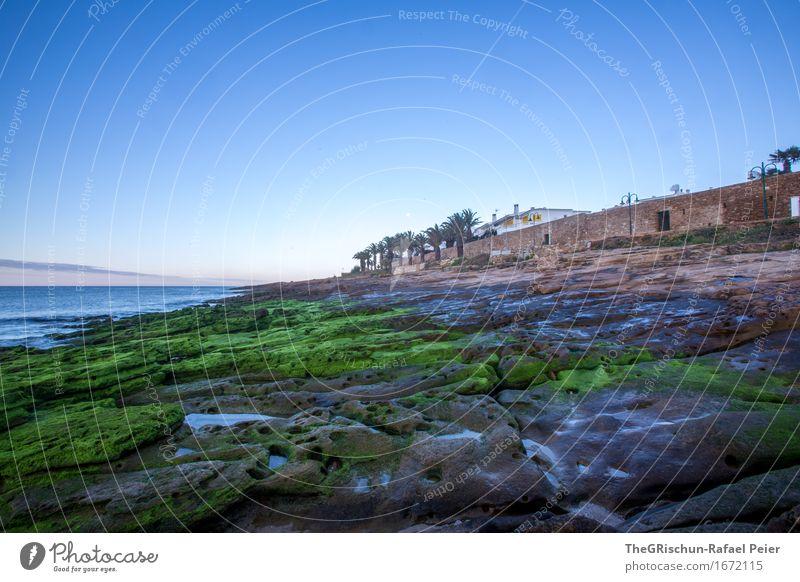 Luz Portugal Umwelt Natur Landschaft blau braun grau grün Algarve Moos Moosteppich Küste Stein Felsen Strand Palme Himmel Meer Ferien & Urlaub & Reisen Farbfoto
