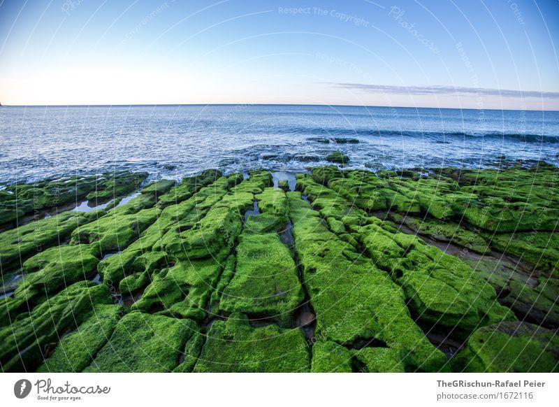 Moos III Umwelt Natur Landschaft blau grün rosa Algarve Portugal Moosteppich Wasser Meer Himmel Stimmung Stein Felsen Muster Farbfoto Außenaufnahme Menschenleer