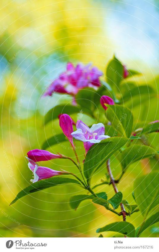 an alle: schöne Pfingsten Natur grün Pflanze Tier gelb Umwelt Landschaft Blüte Park rosa natürlich frisch Sträucher Schönes Wetter Duft Stempel
