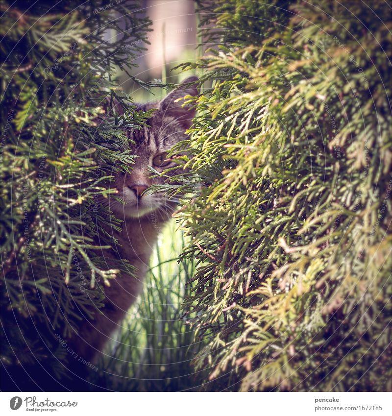 hide and see Garten Park Wiese Tier Haustier Katze 1 beobachten buschig verstecken Katzenauge Tarnung Farbfoto Außenaufnahme Nahaufnahme Detailaufnahme Muster