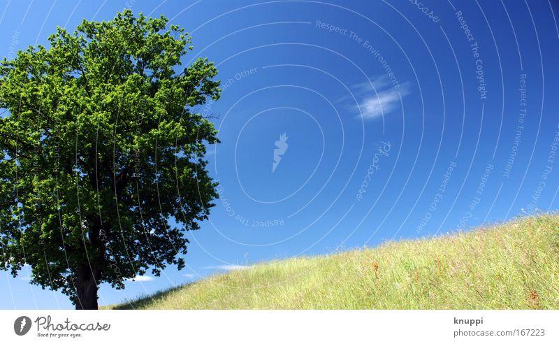 endlich sommer Natur Pflanze Luft Himmel Sommer Schönes Wetter Baum Gras Grünpflanze Wildpflanze Wiese Feld alt ästhetisch einfach fest hell natürlich Wärme