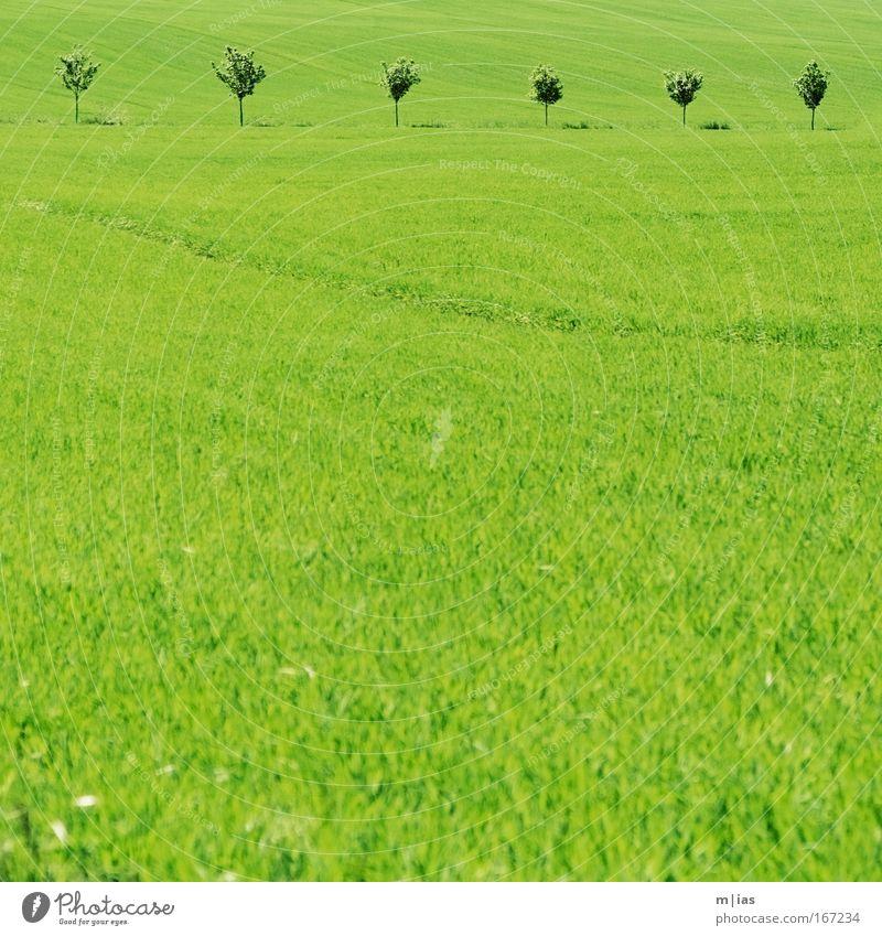 Ton in Ton I Natur Baum Pflanze Sommer Ferne Wiese Gras Frühling träumen Landschaft Zufriedenheit Kraft Feld wandern Umwelt frei