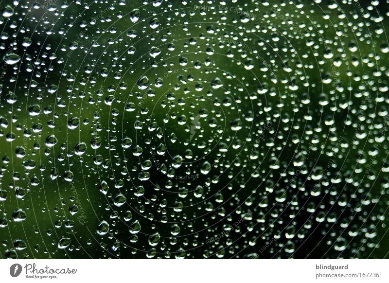 A Million Teardrops Natur Wasser grün schwarz Frühling Regen Glas Hintergrundbild Wetter Umwelt Wassertropfen nass natürlich Flüssigkeit feucht viele