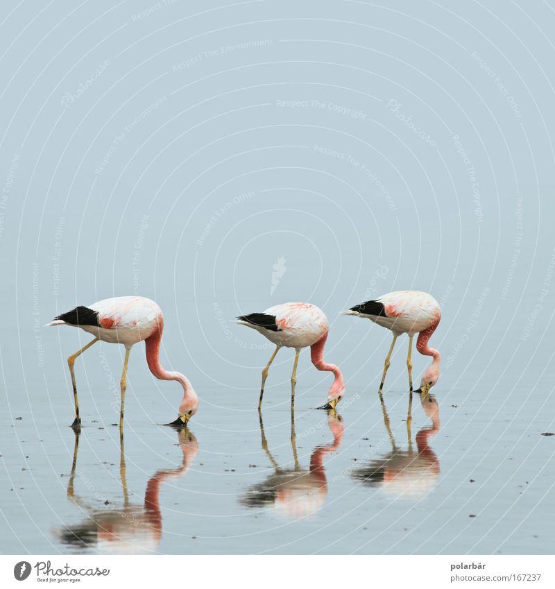 Wasser-Ballett Natur Ferien & Urlaub & Reisen Ernährung Tier Freiheit See Landschaft Luft Freundschaft Zufriedenheit Zusammensein Umwelt frei Ausflug ästhetisch