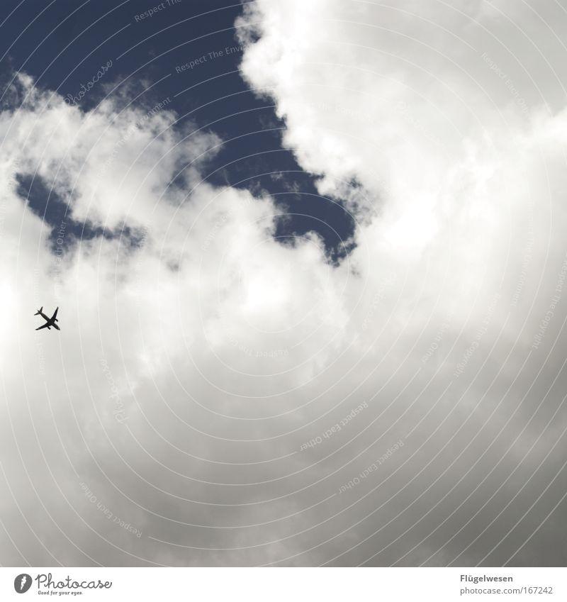 Flying High! Himmel blau Sommer Freude Ferien & Urlaub & Reisen Wolken Ausflug Flugzeug fliegen Tourismus Luftverkehr Lebensfreude Flugzeuglandung Fernweh Sommerurlaub Passagierflugzeug