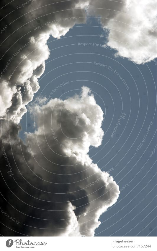 Nicht noch ein Wolken-Bild. Oh doch! Himmel Natur Umwelt Bewegung Wetter Kraft Wind Angst bedrohlich Unwetter Sturm Todesangst Gewitter Klimawandel