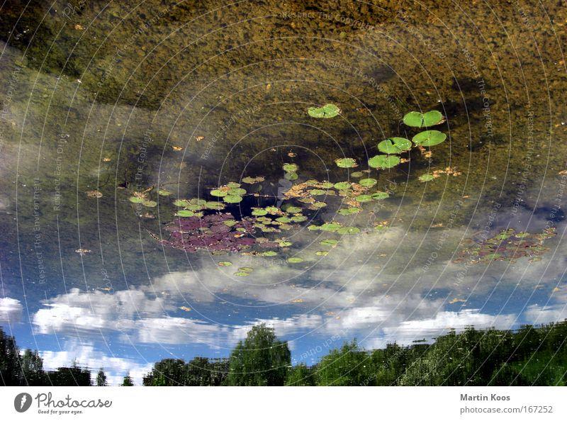 up is the new down Natur Wasser Himmel Wolken oben See Landschaft nass frisch Perspektive Wandel & Veränderung Klarheit Spiegel geheimnisvoll unten drehen