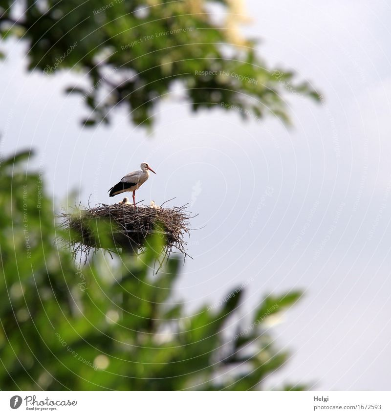 Beschützer... Natur blau Pflanze grün weiß Baum Blatt Tier schwarz Umwelt Leben Frühling natürlich braun Vogel Zusammensein