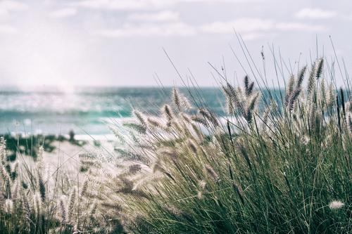 Pacific Dreams Ferien & Urlaub & Reisen Tourismus Ausflug Abenteuer Ferne Freiheit Umwelt Natur Wellen Küste Flussufer Meer Pazifik Oase Schifffahrt Wasser