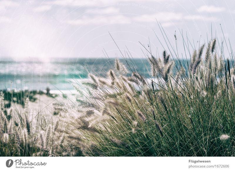 Pacific Dreams Natur Ferien & Urlaub & Reisen Wasser Meer Strand Ferne Umwelt Küste Freiheit Schwimmen & Baden Tourismus Wellen Ausflug Abenteuer Coolness