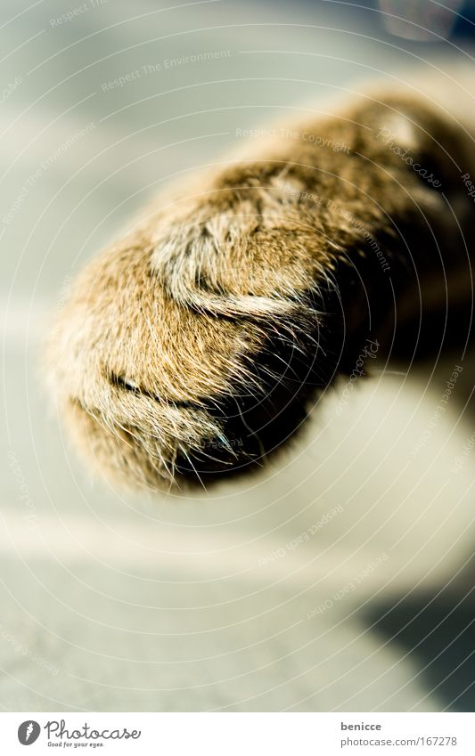 katzenpfote Katze Hauskatze Pfote Fell Makroaufnahme Detailaufnahme Nahaufnahme Tier pratze bedrohlich schön süß niedlich Katzenpfote