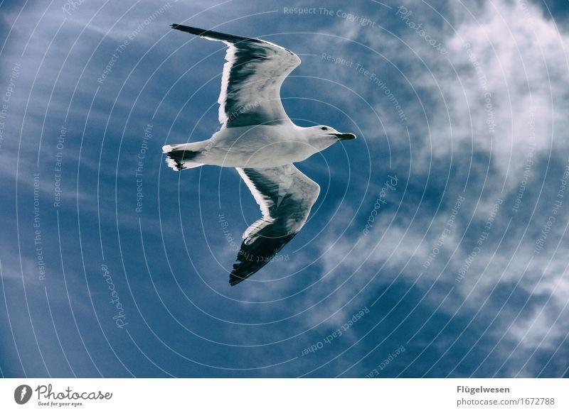 Möwe Ferien & Urlaub & Reisen Tourismus Ausflug Abenteuer Tier Taube Flügel 1 fliegen Möwenvögel Möwendreck Vogel Vogelperspektive Vogelflug Vogelfutter