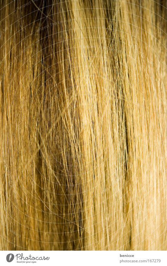 haarig Haare & Frisuren Glätte blond Haarsträhne fadenförmig Nahaufnahme Hintergrundbild Detailaufnahme braun Haarfarbe Farbe