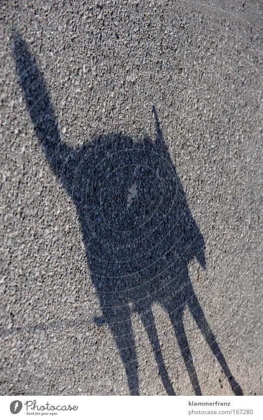 Schattenfuchs Hund Tier schwarz Straße Leben grau Bewegung Beine Fuß gehen Rücken laufen Behaarung modern einzigartig Brust