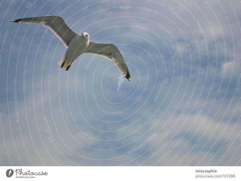 frei sein Natur Himmel Wolken Tier Vogel Flügel beobachten fliegen elegant Neugier blau Kraft Macht schön Hochmut Übermut Bewegung Freiheit Frieden