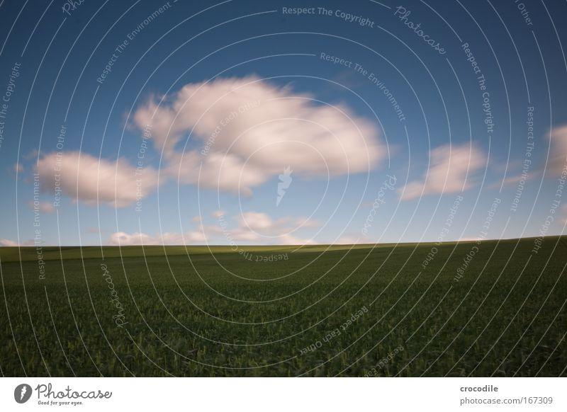 wolkenfetzen V Natur Pflanze Wolken Leben Bewegung Frühling Landschaft Luft Zufriedenheit Kraft Feld Wind elegant Umwelt Beginn ästhetisch