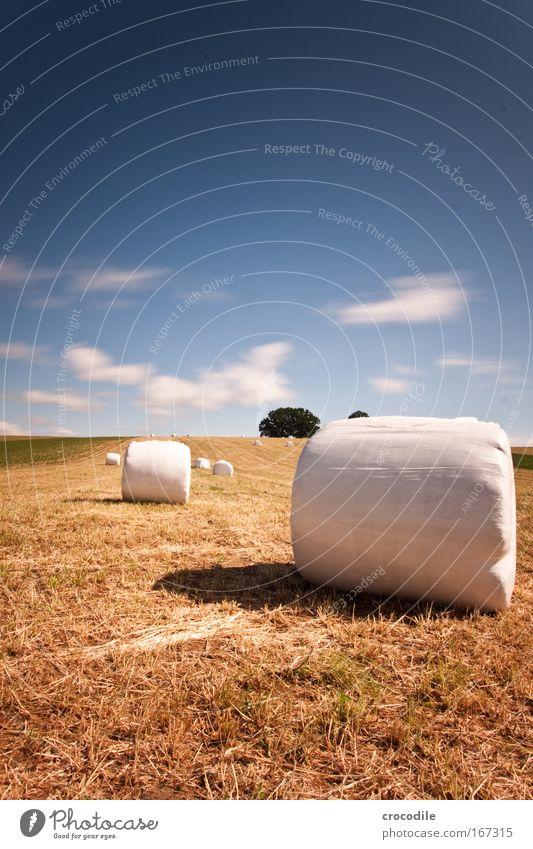 Marshmallow Feld II Farbfoto Außenaufnahme Experiment Menschenleer Textfreiraum links Textfreiraum oben Textfreiraum unten Tag Schatten Kontrast Sonnenlicht