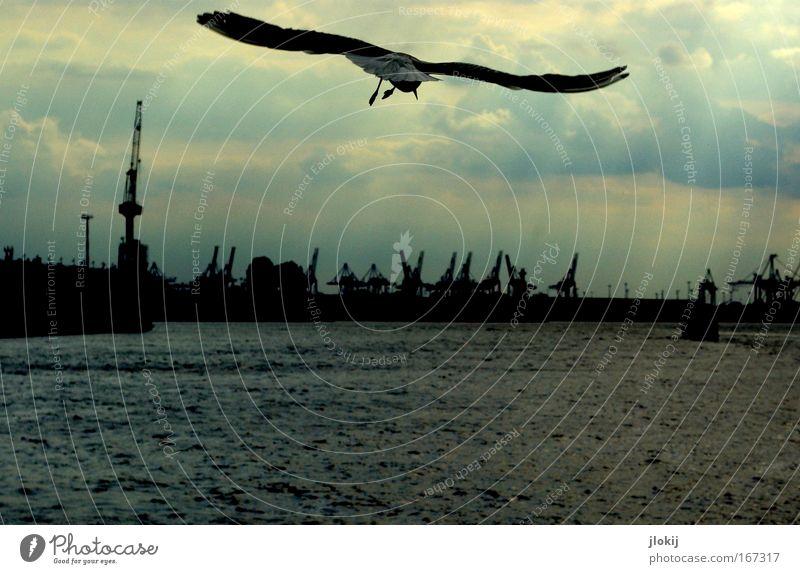 Flugschau Wasser Himmel grün blau Stadt Winter Wolken Tier Herbst See Luft Vogel Wellen fliegen frei hoch