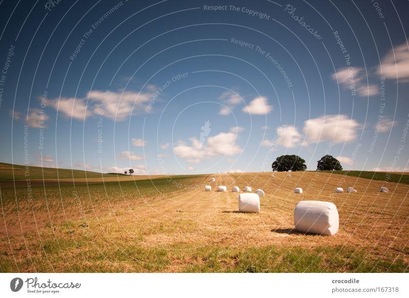 Marshmallow Feld III Natur Himmel Pflanze Wolken gelb Landschaft braun Wind Umwelt Horizont ästhetisch rund Klima Hügel Kreativität
