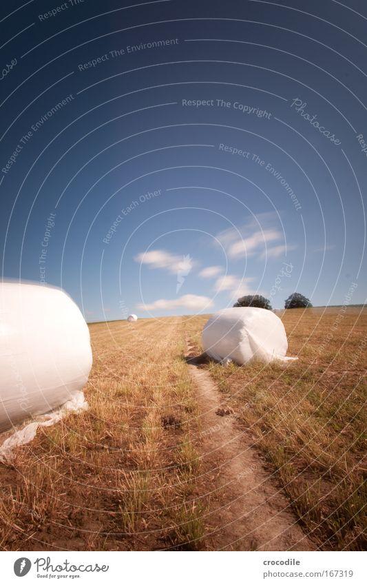 Marshmallow Feld IV Farbfoto Außenaufnahme Tag Schatten Kontrast Sonnenlicht Langzeitbelichtung Bewegungsunschärfe Starke Tiefenschärfe Zentralperspektive
