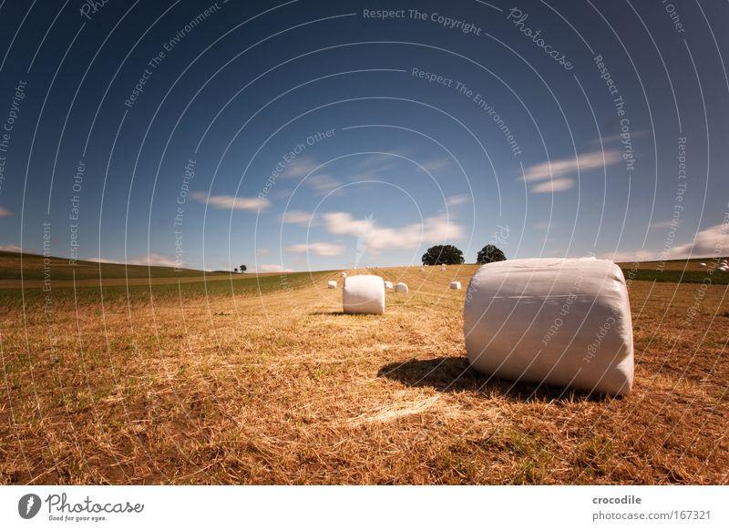 Marshmallow Feld V Farbfoto Außenaufnahme Tag Schatten Kontrast Sonnenlicht Langzeitbelichtung Bewegungsunschärfe Starke Tiefenschärfe Zentralperspektive Umwelt