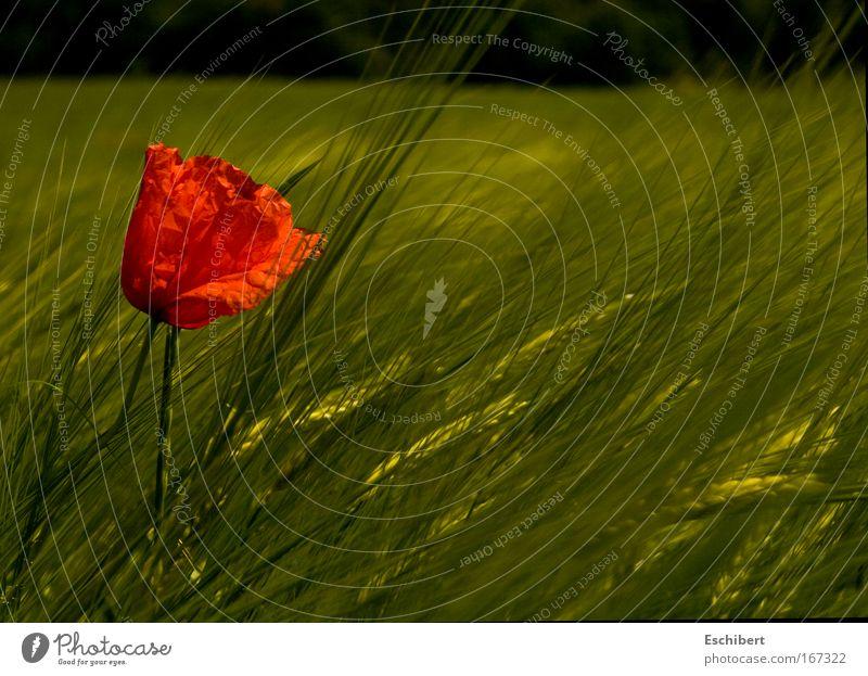 Schlecht getarnt! Natur Sonne Blume grün Pflanze rot Sommer Ferien & Urlaub & Reisen Farbe Erholung Freiheit Wärme Landschaft Zufriedenheit Feld