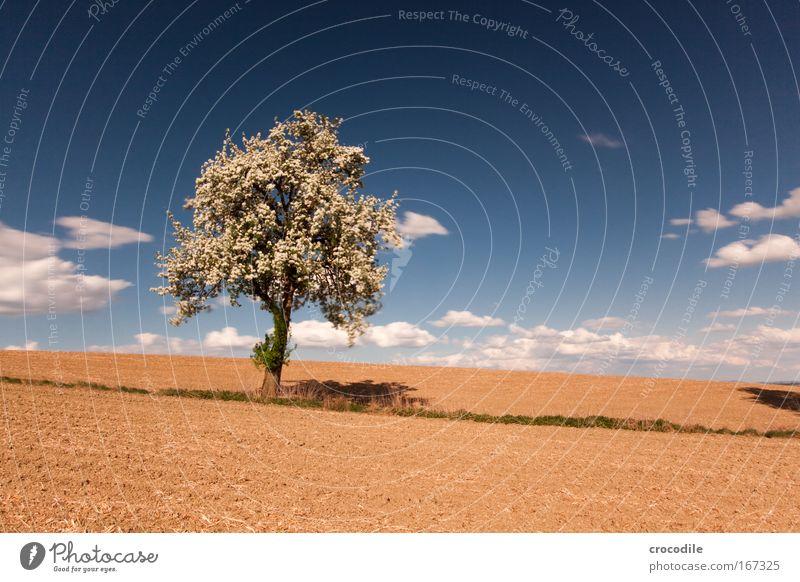 Apfelblüte IV Himmel Natur Pflanze schön Baum Landschaft Wolken Umwelt Blüte Frühling Stimmung Wetter Zufriedenheit Feld Erde Wind