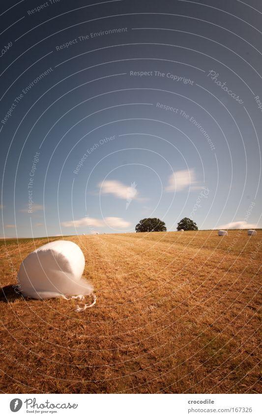 Marshmallow Feld VI Natur Himmel Pflanze Wolken gelb Landschaft braun Wind Umwelt Horizont ästhetisch rund Klima Hügel Schönes Wetter