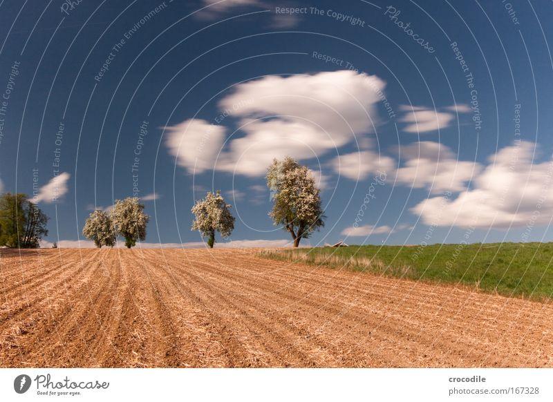 Apfelblüte V Farbfoto Außenaufnahme Menschenleer Textfreiraum oben Textfreiraum unten Tag Schatten Kontrast Sonnenlicht Starke Tiefenschärfe Zentralperspektive