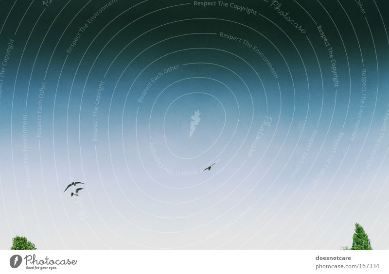 der letzte tag am himmel. Himmel weiß Baum grün blau Tier dunkel grau Stimmung Vogel fliegen Tiergruppe bedrohlich außergewöhnlich analog Wildtier