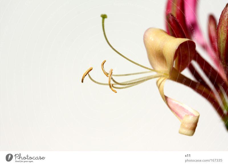 zartes Pink im Sonnenlicht Natur schön Blume Pflanze Sommer Blüte Glück Park rosa elegant Umwelt Fröhlichkeit modern ästhetisch nah außergewöhnlich
