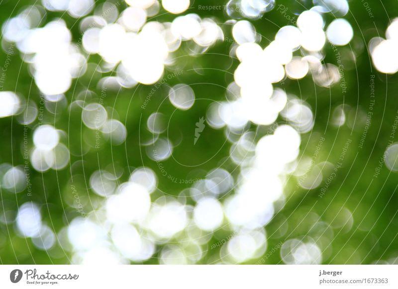 im Wald Natur Pflanze grün weiß Baum Blendenfleck Blendeneffekt