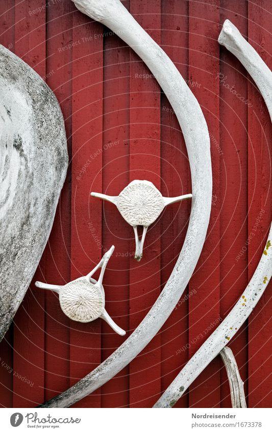 Walknochen Meer rot Tier Ferne Umwelt Wand Mauer Tod grau Fassade Zeichen Dorf gruselig Schifffahrt Umweltschutz exotisch